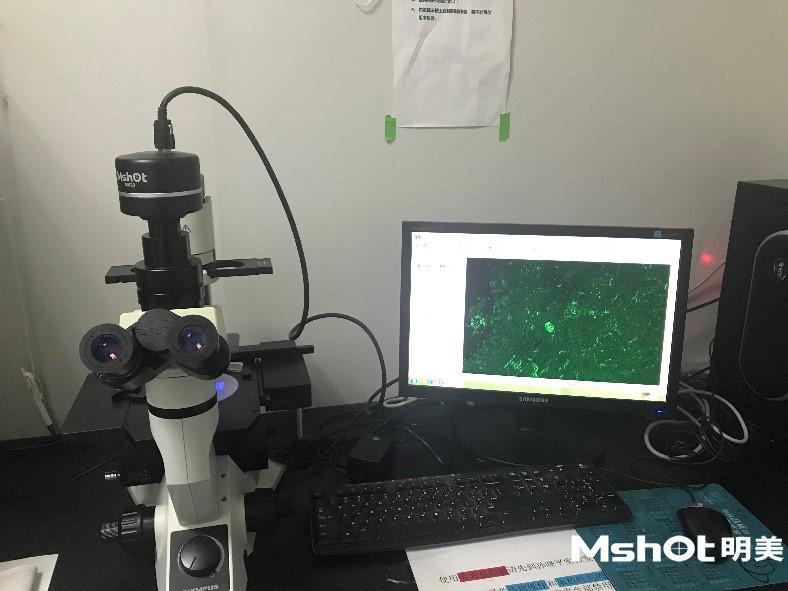 奥林巴斯倒置荧光显微镜CKX41